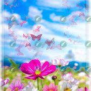 Луговые цветы коллаж
