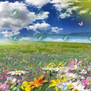 Цветочная полянка коллаж