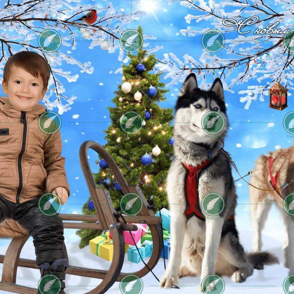 Мальчик и собачья упряжка